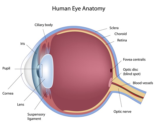 QEC   Learn - Eye Anatomy, Quality Eye Associates, Quality Eye ...